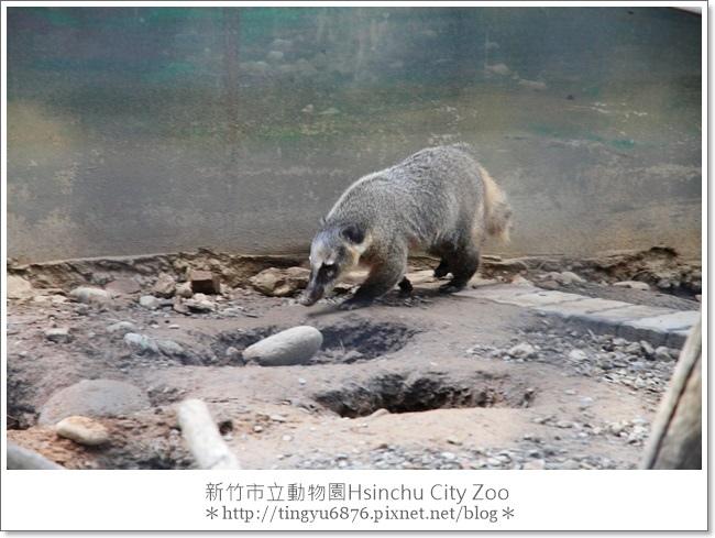 新竹市立動物園14.JPG