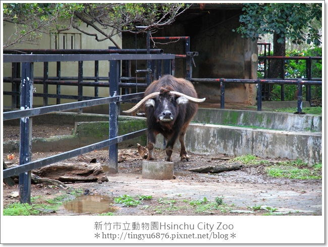新竹市立動物園16.JPG