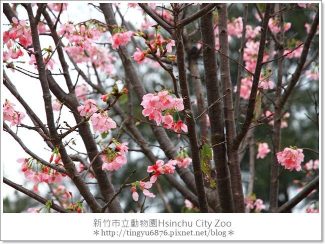 新竹市立動物園17.JPG