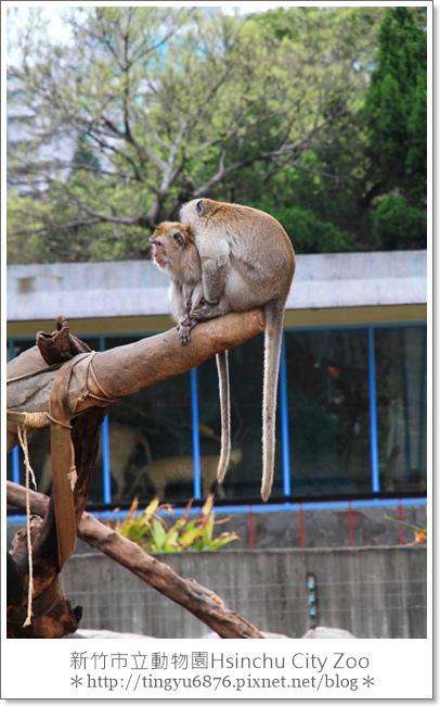新竹市立動物園18.JPG