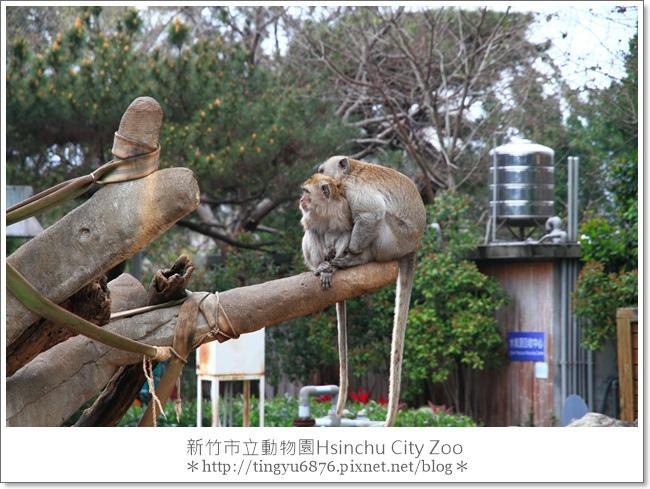 新竹市立動物園19.JPG