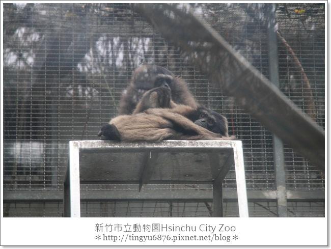 新竹市立動物園20.JPG