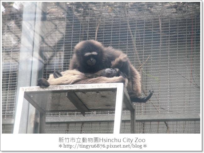新竹市立動物園21.JPG