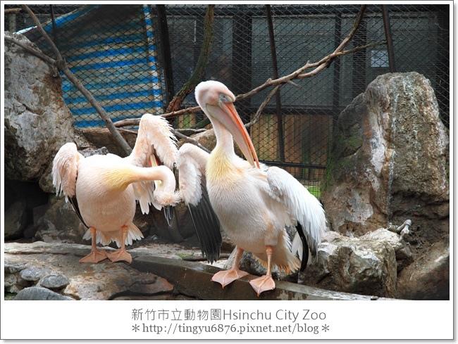 新竹市立動物園22.JPG