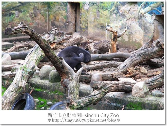 新竹市立動物園23.JPG
