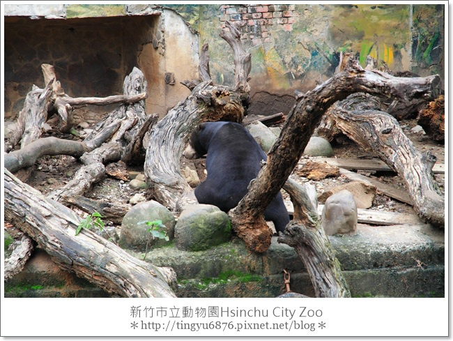 新竹市立動物園25.JPG