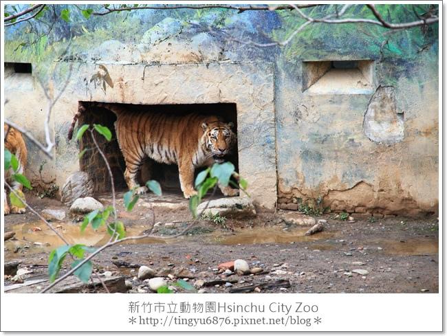 新竹市立動物園30.JPG