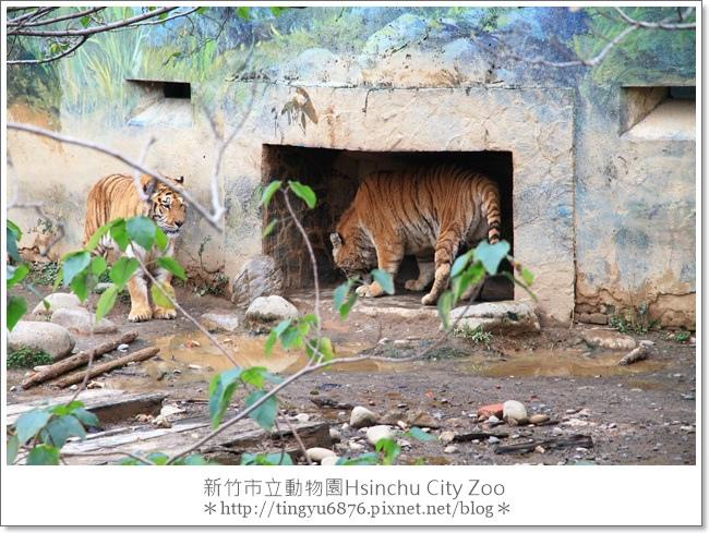 新竹市立動物園31.JPG