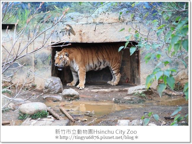 新竹市立動物園32.JPG