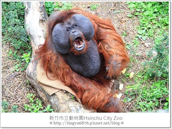 新竹市立動物園42.JPG