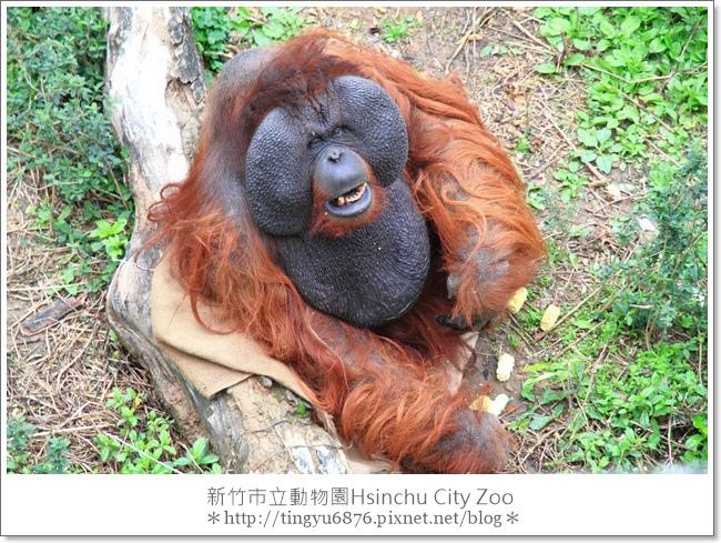 新竹市立動物園43.JPG
