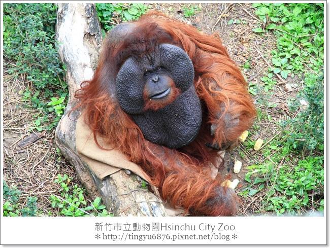 新竹市立動物園44.JPG