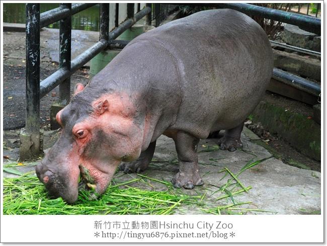 新竹市立動物園48.JPG