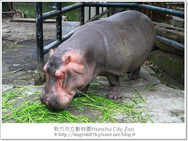 新竹市立動物園49.JPG