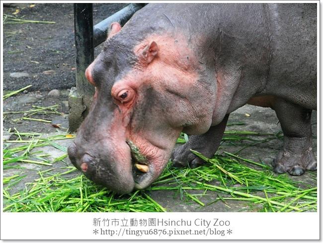 新竹市立動物園50.JPG