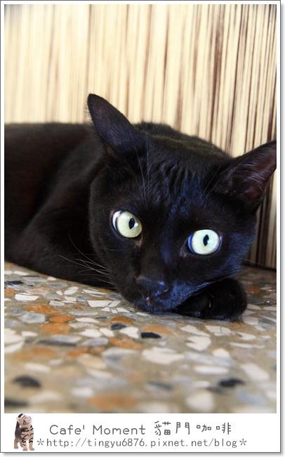貓門117.JPG