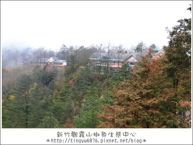 觀霧14.JPG