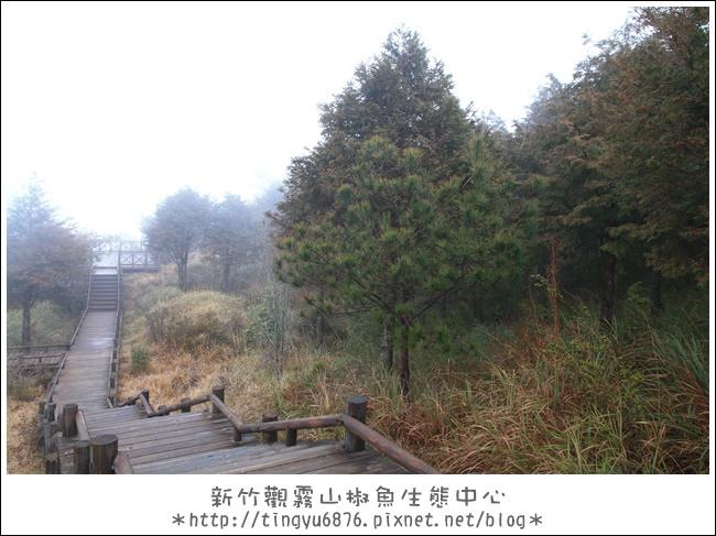 觀霧24.JPG