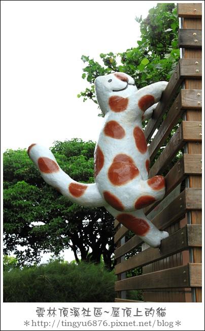 屋頂上的貓09.JPG