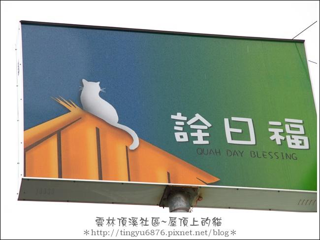 屋頂上的貓49.JPG