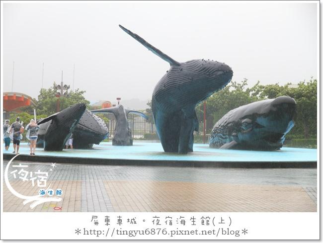 夜宿海生館06.JPG