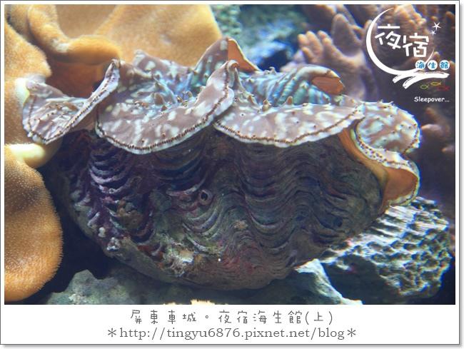 夜宿海生館89.JPG