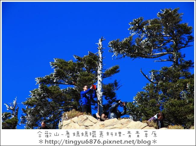 合歡山12.JPG