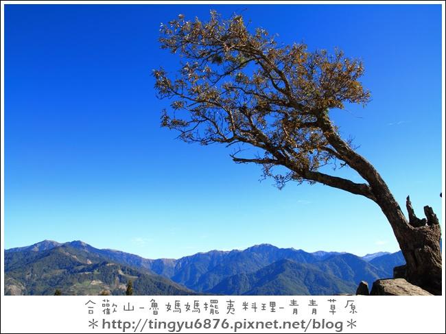 青青草原19.JPG