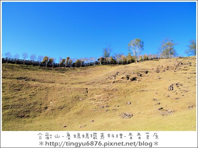青青草原21.JPG