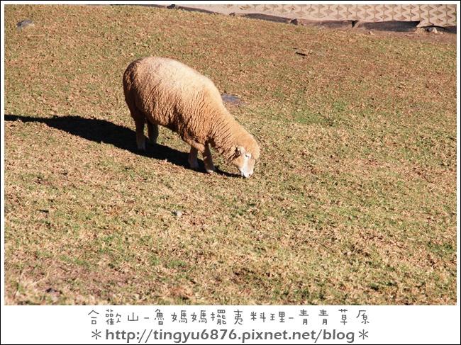 青青草原26.JPG