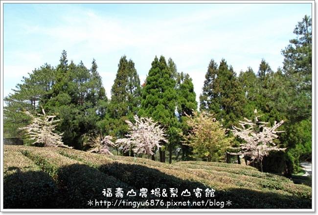 福壽山農場79.JPG