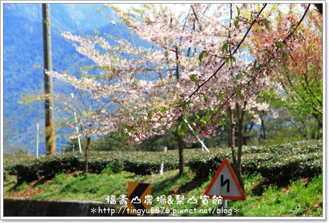 福壽山農場84.JPG