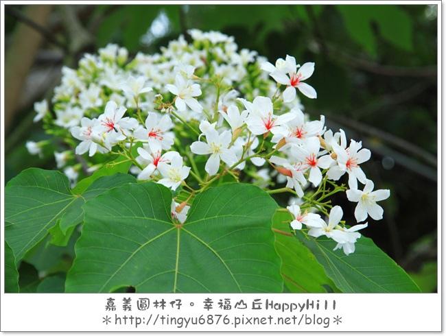 幸福山丘07.JPG