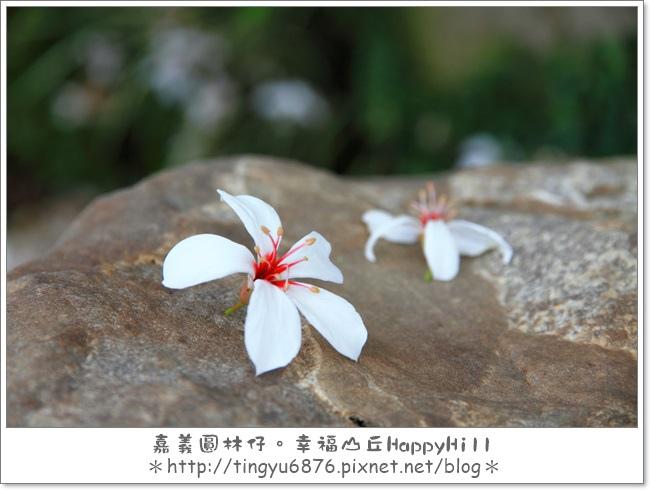 幸福山丘15.JPG
