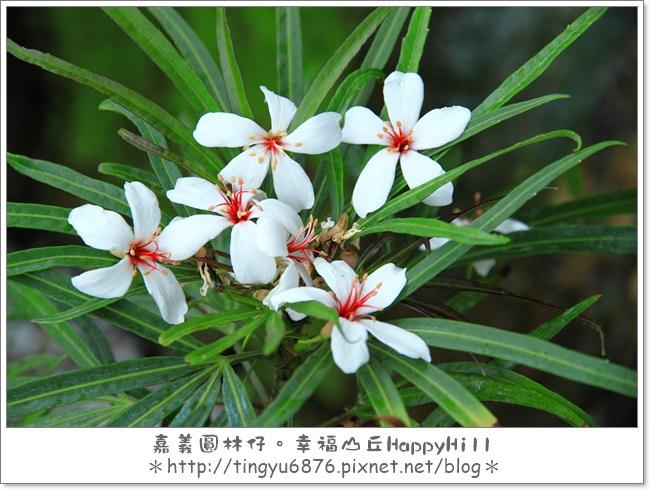 幸福山丘23.JPG