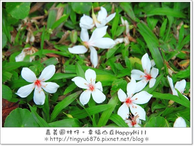 幸福山丘22.JPG