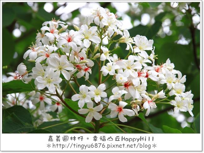 幸福山丘30.JPG