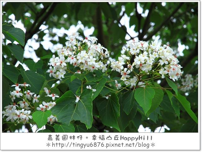 幸福山丘32.JPG