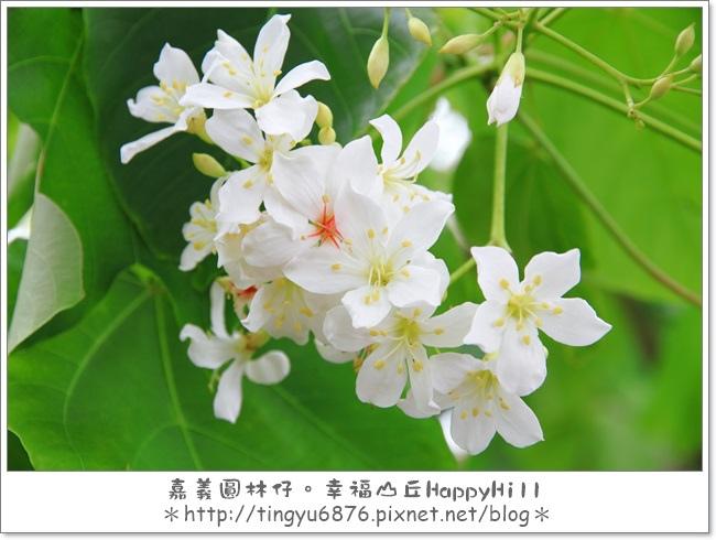 幸福山丘42.JPG