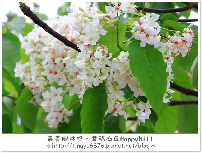 幸福山丘43.JPG