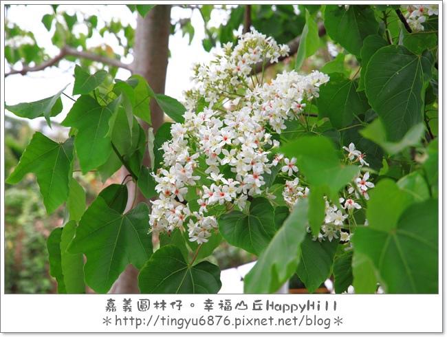 幸福山丘44.JPG