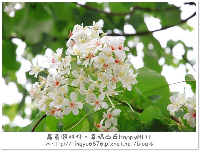 幸福山丘45.JPG