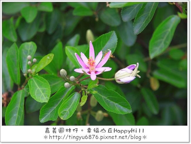 幸福山丘63.JPG