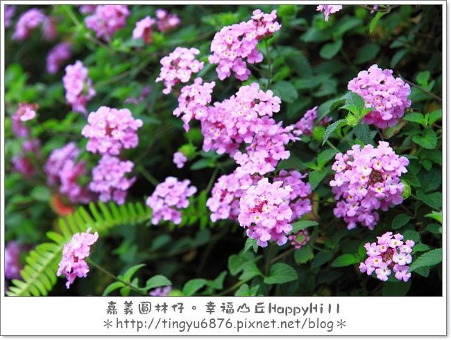 幸福山丘66.JPG