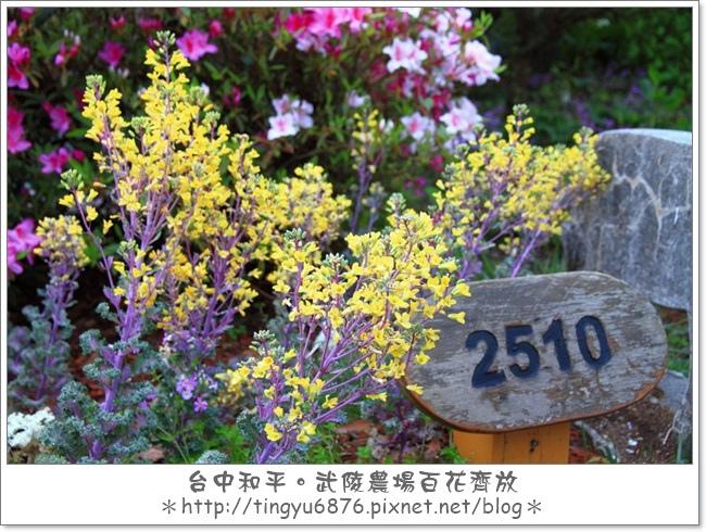 武陵農場129.JPG