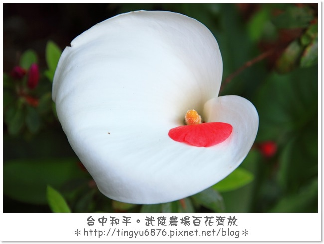 武陵農場135.JPG