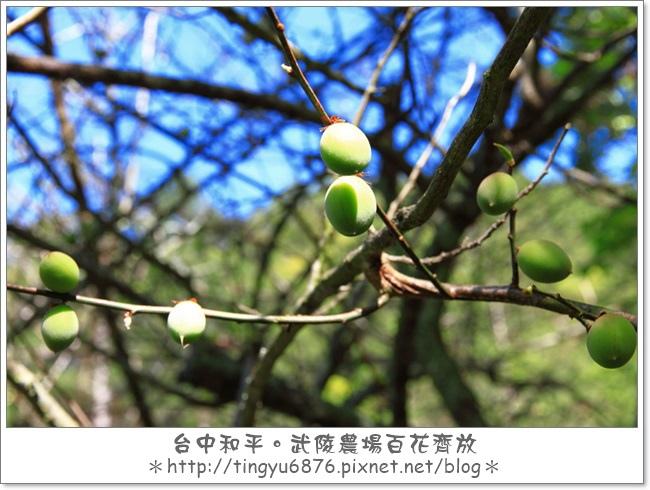 武陵農場146.JPG