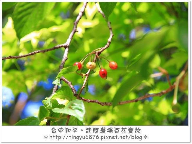 武陵農場148.JPG