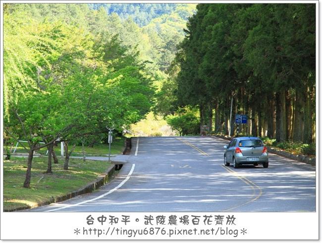 武陵農場159.JPG