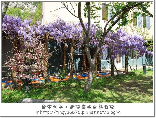 武陵農場253.JPG